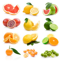 set of 12 different citruses