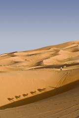 Erg Chebbi dune with camel shadows