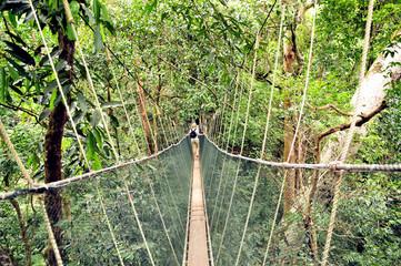 Hängebrücke im Dschungel Seile