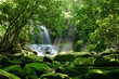 A large waterfall is hidden by lush foliage and mossy rocks - 33203340