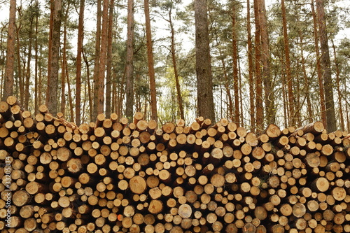 Holzstapel, Kiefer, Wald