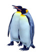 Two isolated emperor penguins with clipping path