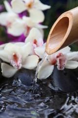 orchidées et bambou