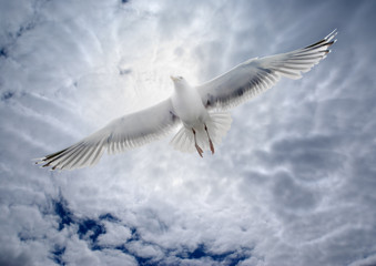 Seagull soaring over the sea on the background of the cloudy sky