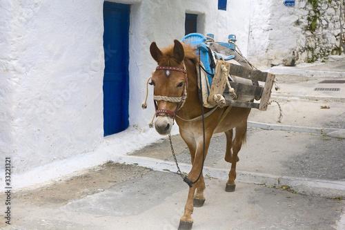 Fotobehang Ezel grèce, cyclaes, amorgos : village de lagada, âne