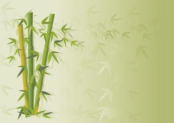 Bambu e ramos