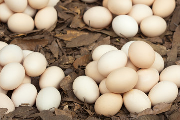 eggs in garden