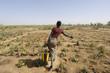 Leinwandbild Motiv africa, mali, donna contadina