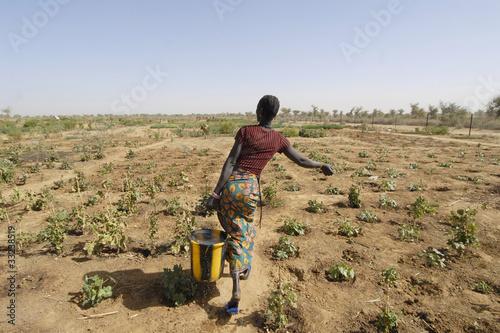 Afryka, Mali, Donna contadina
