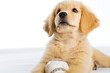 puppy with a baseball