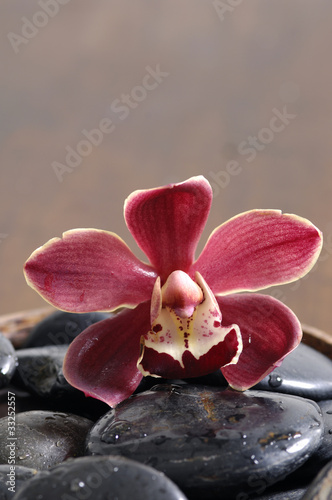 Orchid and black pebbles