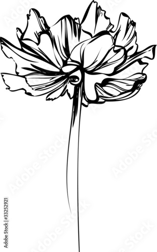 sketch of a flower with large petals