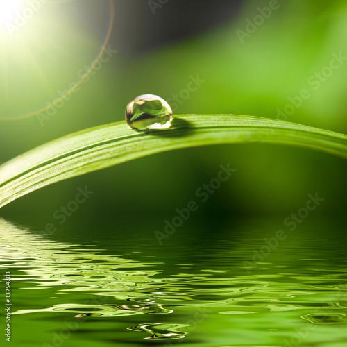 świeże zielona trawa