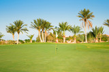 Wide Green Fairway and Palms poster