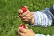 Kind spielt mit Kirschen
