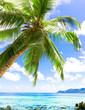 Heaven Coconut Beauty