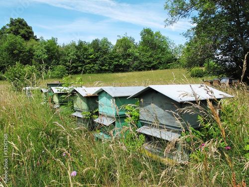ruche,abeilles,miel,campagne,nature,fleurs