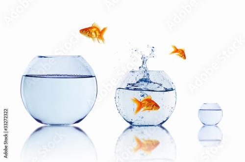 Leinwandbild Motiv gold fish in a fishbowl
