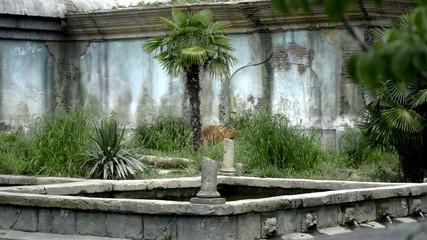 appare una tigre nel giardino del maharaja