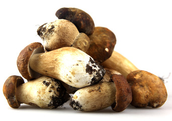Mushrooms - Porcini, Boletus edulis