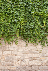 Background of old wall and vinegrapes