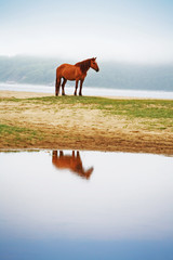mystical reflection of  horse in the lake