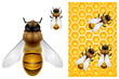 Honey Bee and Honeycomb background