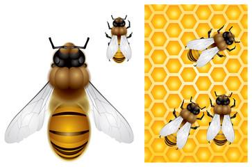 Honey Bee and Honeycomb background
