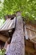 Cabane, chalet, construction, nature, écologie, durable, bois