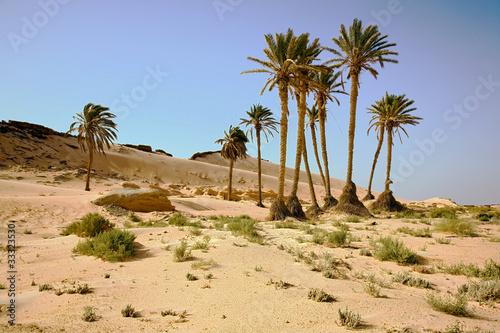 Poster Tunesië chott el jerid, desert, oasis, tunisia