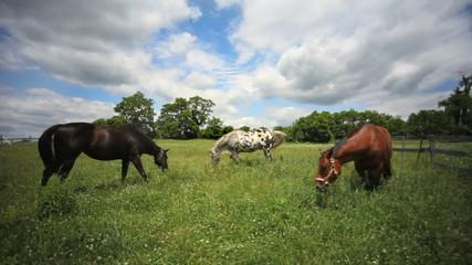 Horses on Beautiful Farm