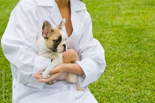 Cachorro de French Bulldog