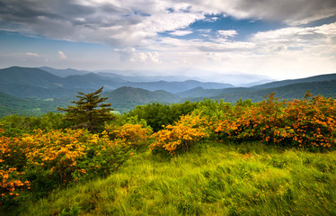 Flame Azalea Blooms Blue Ridge Mountains Roan Appalachian Trail