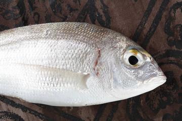 fish close up