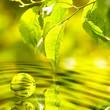 Pflaumenblätter mit Wasserspiegelung