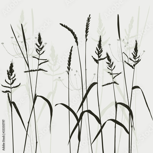 collection, for designers, plant vector|33350797