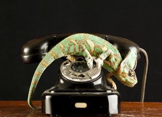chameleon on a telephone