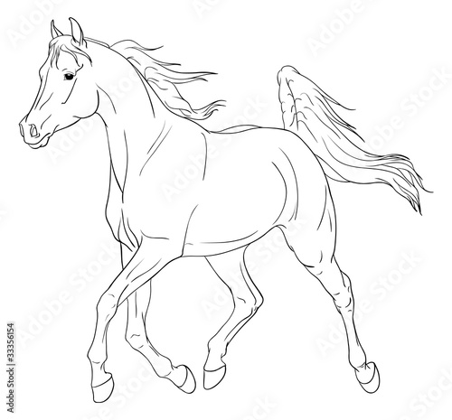Arabian horse vector illustration