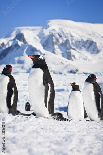 penguins in Antarctica © Goinyk