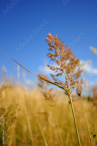 grass,meadows and blue sky