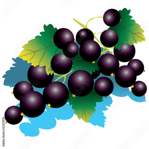 Blackcurrant with green leaves. Vector illustration.