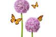 Butterfly Bloom - Blumen und Insekten