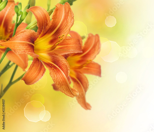 Yellow Lily Flower border design