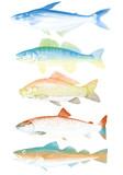 set of colorful vector fishes