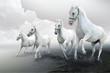 Four white horses