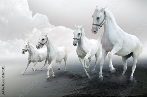 Four white horses © Mrkvica