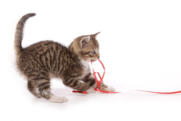 chaton jouant avec ruban
