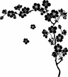Fototapety Blooming cherry Sakura branch in ink
