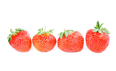 row of four strawberries isolated