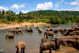 Elephant herd in the jungles